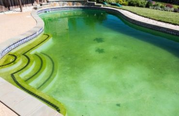 Grünes Wasser Algizide